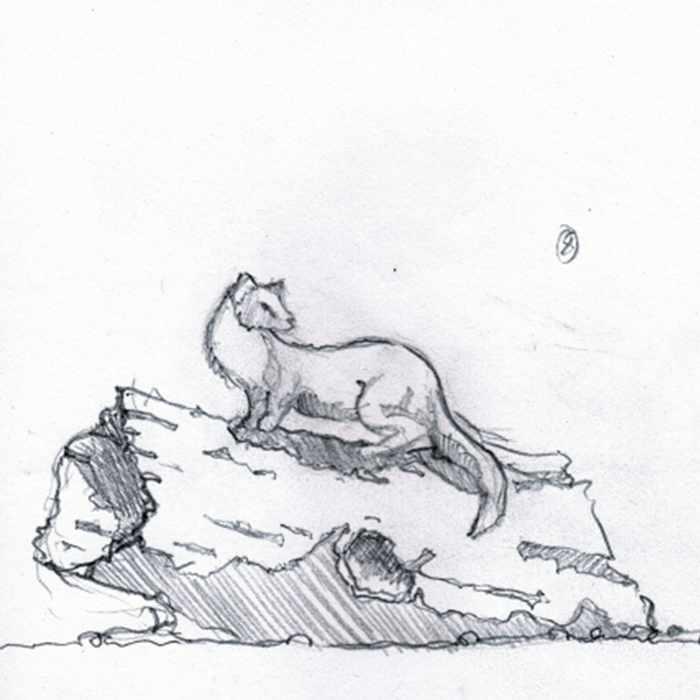 Drawing of pine marten sculpture