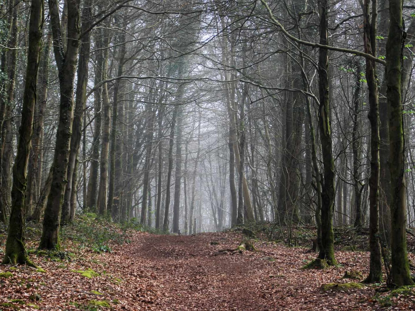 Fforest Fawr with fog in the distance
